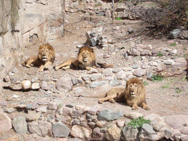 Zoo de Mendoza