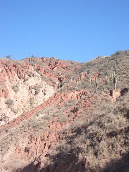 Parc naturel de Cactus