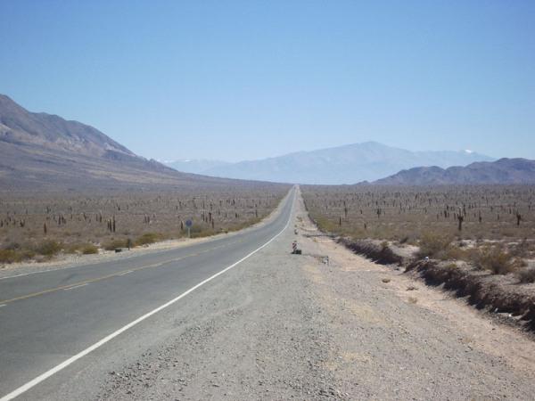 Plaine de Cactus