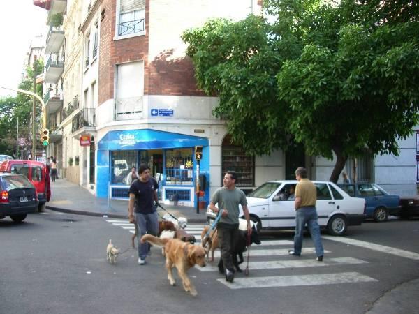 Promeneur de chiens à Buenos Aires