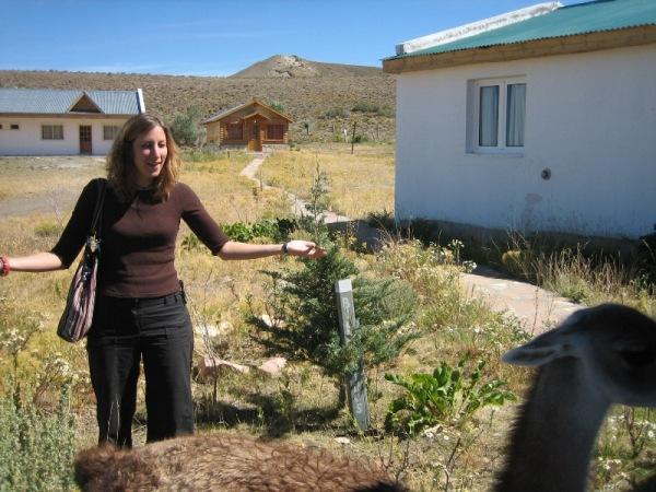 Marion fait fuir le guanaco